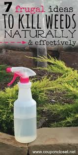 How To Remove Weeds From Patio Best 25 Killing Weeds Ideas On Pinterest Homemade Weed Spray
