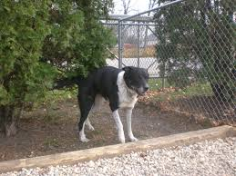 bluetick coonhound terrier mix meet the pooches an introduction to the dogs of orphans of the