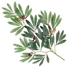 silk green olive tree branches 24 x75 leaves w olives
