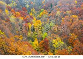 aerial view colorful deciduous forest autumn stock photo 524538865