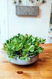 Plants For Dark Rooms by 9 Design Tricks We Learned From Joanna Gaines Hgtv U0027s Decorating