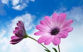 Beautiful Flower Pictures Wallpaper Beautiful Flower Desktop Full Hd Pics For Pc Nonawalls Com