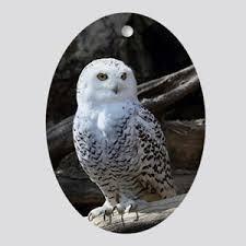 owl ornaments owl ornaments cafepress