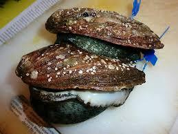 cuisiner des ormeaux ormeaux poêlés et risotto aux truffes cuisine de la mer