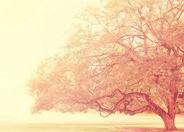 tree vintage image 493562 on favim