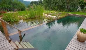 Swimming Pool Ideas For Backyard How To Create A Natural Swimming Pool In Your Arizona Backyard