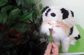 halloween panda kitty youtube
