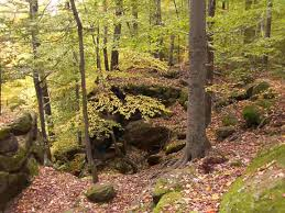 Ohio forest images Chapin forest reservation hiking trail pictures movie jpg
