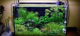 Aquascape Lighting Planted Tank Submerged Jungle By Fekete Tamas Aquarium Design