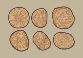 vector tree ring free vector stock graphics images