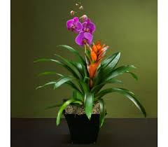 sympathy plants sympathy plants delivery bradenton fl ms s flowers gifts