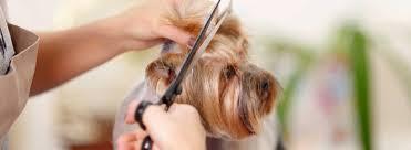 pet grooming plainview u0026 levittown ny cat grooming u0026 dog grooming