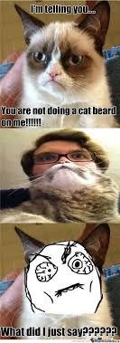 Cat Beard Meme - cat beard by metalchick meme center