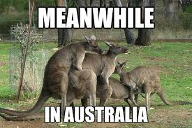 Kangaroo Meme - image 487207 meanwhile in know your meme