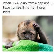 Meme Monkey - the best monkey memes memedroid