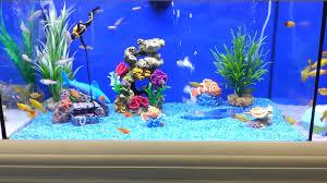brilliant fish tank for