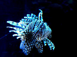 here is another of the cool looking fish it was can i - Cool Looking
