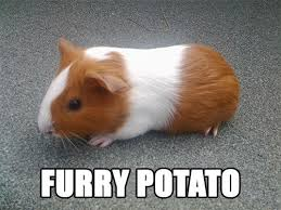 Rodent Meme - guinea pig better names for things know your meme