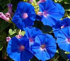 Flowersbybillbush Montreal Postal Code Map - feedspot rss feed