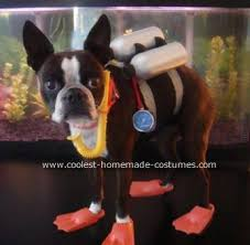 Boxer Dog Halloween Costume 158 Pet Halloween Costumes Images Homemade