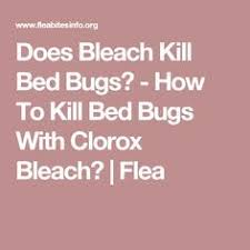 Bed Bugs What To Do What Kills Bed Bugs What To Do If You Have Bed Bug Take 5 Simple