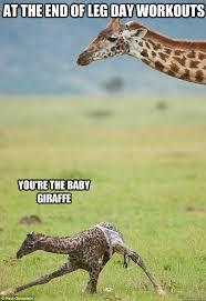 Giraffe Meme - giraffe meme 28 images funny giraffe memes www pixshark com