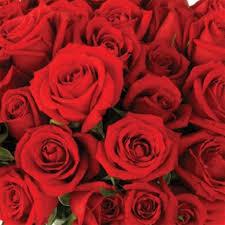 roses wholesale send fresh cut bulk flowers 200 roses wholesale