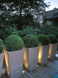 boxwoods are perfect for pots u0026 urns planters squares and gardens
