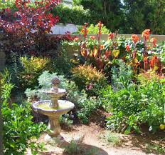california native plant garden design home