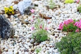 About Rock Garden by Rock For Garden Home Design Ideas