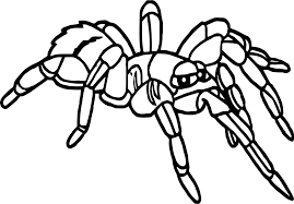 rainforest tarantula coloring page wecoloringpage