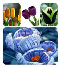 Cheap Flower Seeds - online get cheap flower seeds seeds stripe aliexpress com