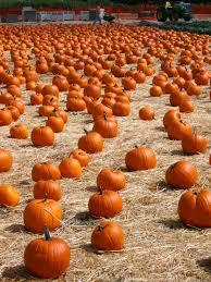 spirit halloween gresham mirth and musings archives into the cauldron