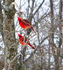 How To Attract Indigo Buntings To Your Backyard 116 Best Birdwatching Images On Pinterest Backyard Birds Bird