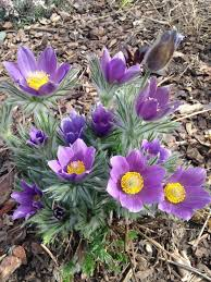 plants native to colorado jeffco gardener january 2016
