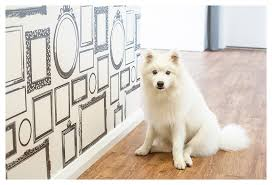 photo frame wall wallpaper memories on display puppy tales