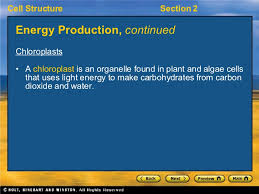 which plant cell organelle uses light energy to produce sugar chapter 7 2 notes