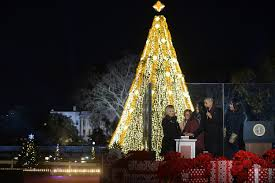 best christmas lights in the world where is the world u0027s largest christmas tree citymetric