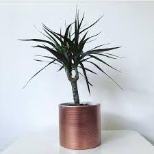 ribbed metallic pot plant pot medium desk accessory