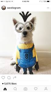 53 of the cutest halloween costumes for dogs dog halloween
