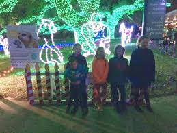 Christmas Lights At Houston Zoo by Texas Tigers Houston Zoo Lights
