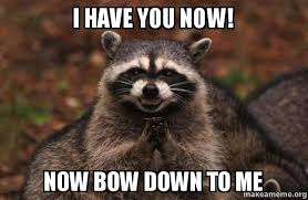 Bow Down Meme - i have you now now bow down to me evil plotting raccoon make a meme
