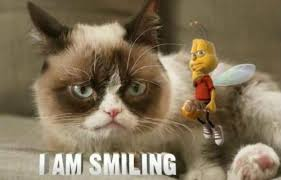 Smiling Cat Meme - funny angry grumpy cat memes collection for friends family