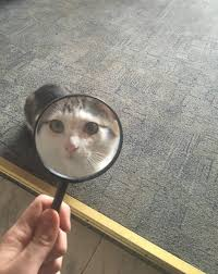 Mad Kitty Meme - psbattle magnifying glass held up to the face of an angry cat
