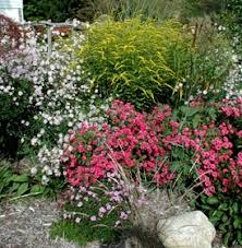 222 best butterfly gardening images on pinterest diy landscaping