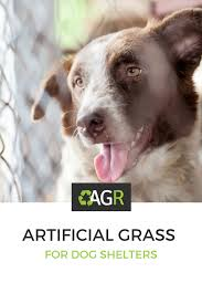 10 reasons why used artificial grass is great for dog shelters