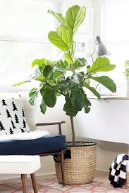 feng shui decor family relationships can be healthy use some feng shui