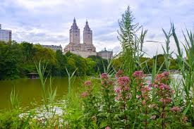 new york city the top 10 parks global storybook