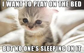 Sad Kitten Meme - don t be sad kitten meme pets wallpapers