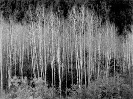 living room cool ansel adams prints in aspens for wall art ideas